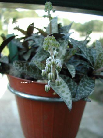 cactus_180