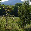 2009 09 08 Le Lizieux vu à Bronac Haut