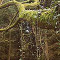 Les arbres de lesmoal