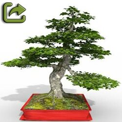 01 Fagus sylvatica bonzai beech Export tree 3d plant model factory 3ds cad max fbx obj icon reduced