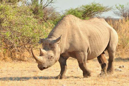 Namibie (226)