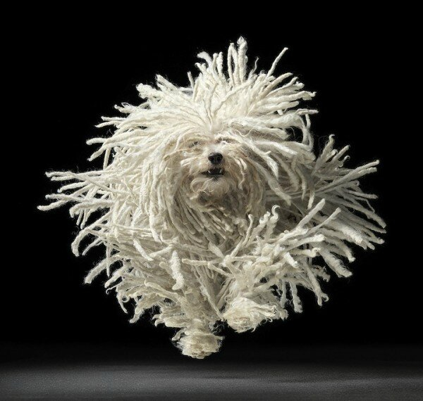 Tim-flach-dogs-gods-1