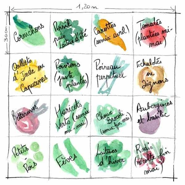 La gallinette page 1 la gallinette for Exemple potager permaculture