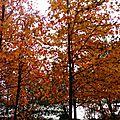 Vielle automne 2410153