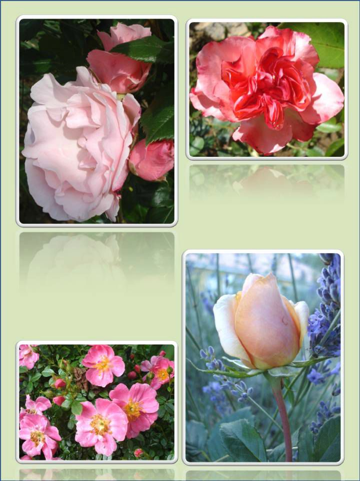 Fleurs 2009-2010 (42)