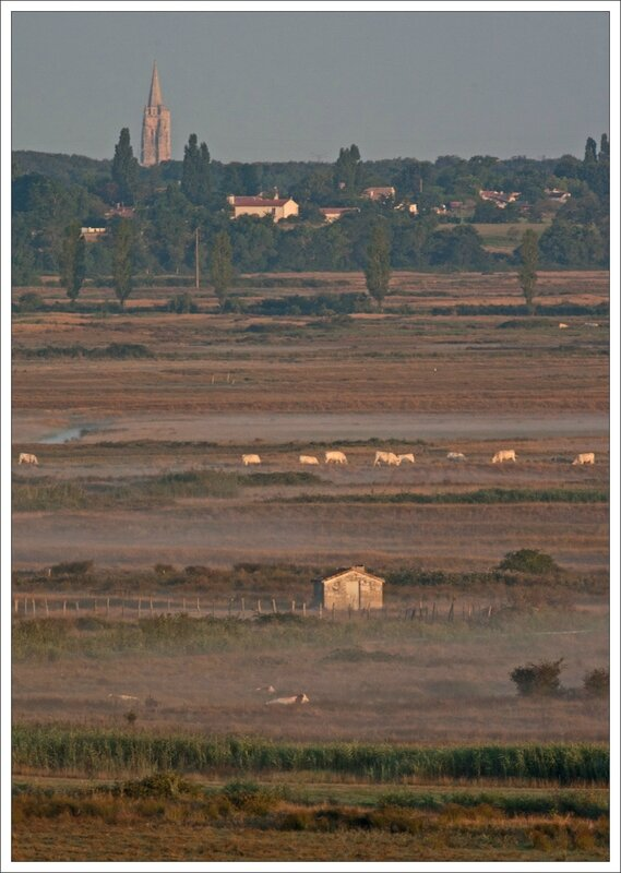 MS paysage eglise Marennes matin 310714