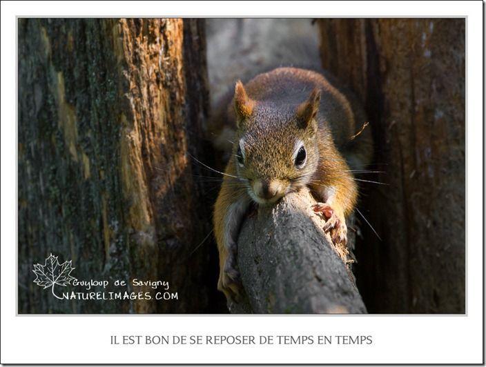 IMG_3088-naturelimages.com