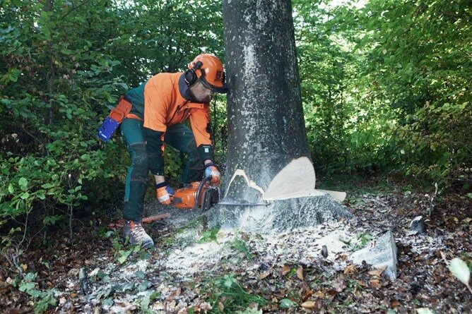 Photo-abattage-arbre-Husqvarna