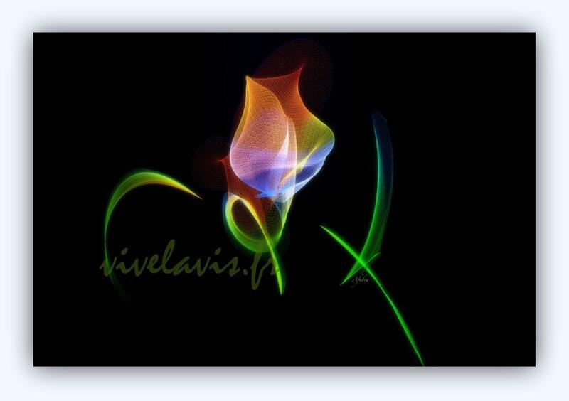 59 - Tulipe
