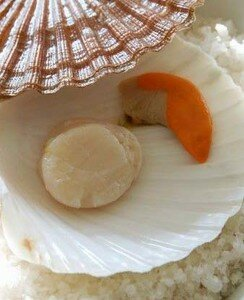 Coquille_Saint_Jacques
