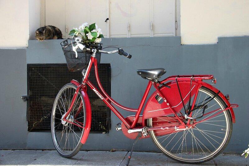 7-vélo, chat (rue Crémieux)_2162