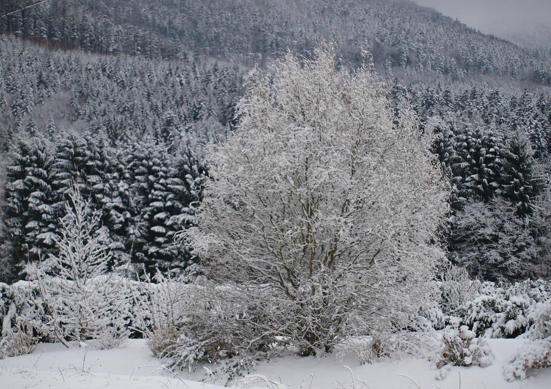 Paysages de neige ...