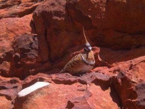 Uluru - Kata Tjuta - King's Canyon 019