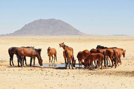 Namibie (365)