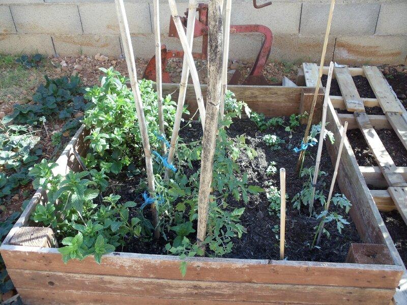 jardin 001