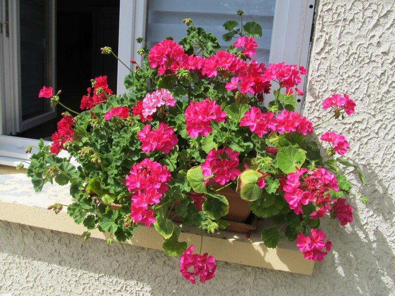 fleurs & derniere poterie 015