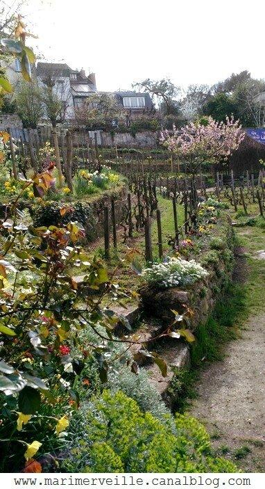 La vigne de Montmartre - Marimerveille