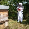 Mon mini apiculteur...