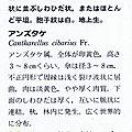 Cantharellus cibarius_1988 IOH p 400 b