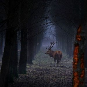 animal-animals-buck-deer-landscape-Favim