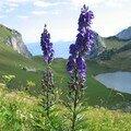 Le lac de Lovenex 19 août 2007 015