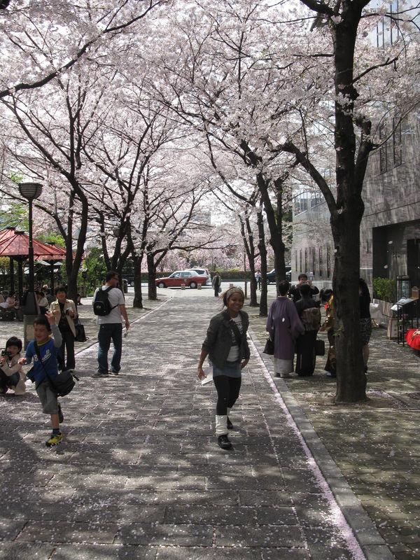 sakura-cerisiers à Kyoto