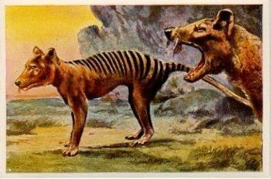 Image Loup-Marsupial