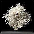 Ceci est un chien