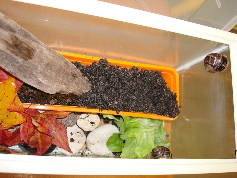 escargots 2009 (4)