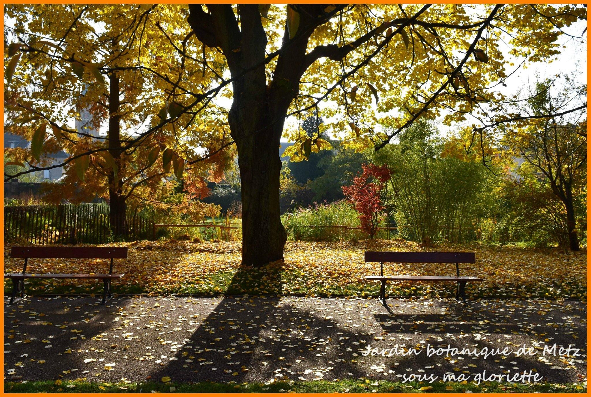 Le jardin botanique de metz a mis ses couleurs d 39 automne for Jardin botanique metz