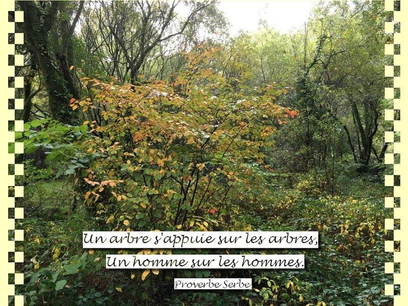 citation un arbre s'appuie sur les arbres