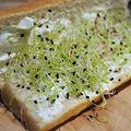Sandwich...aux graines germées