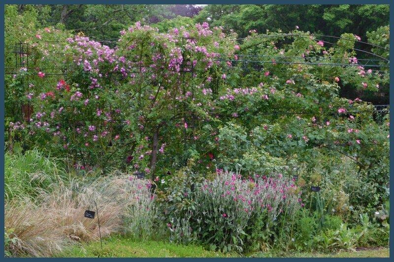 Fête des jardins Autour du cornus et héliotropes en Scévolles 03-0612