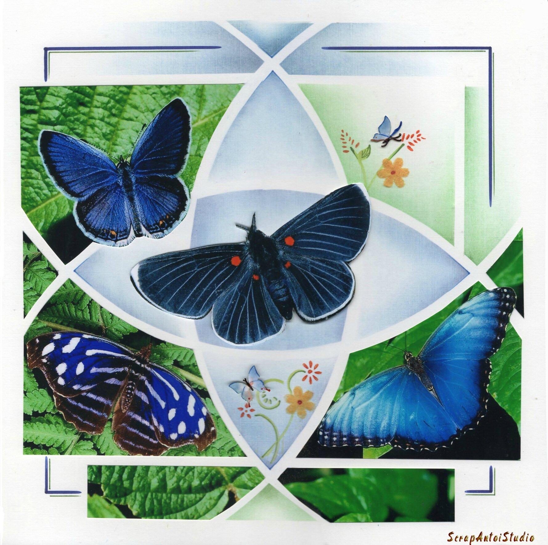 2014 02 Papillon l'eveil de la nature1 marquée