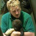 Wilhelma - nursery. bébé gorille