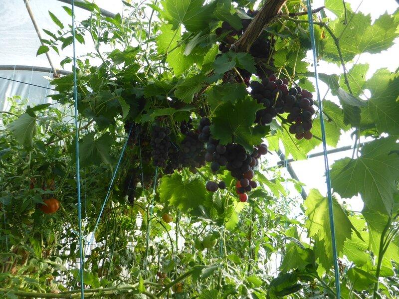 10-raisins (3)