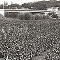 1950- c - Pont actuel