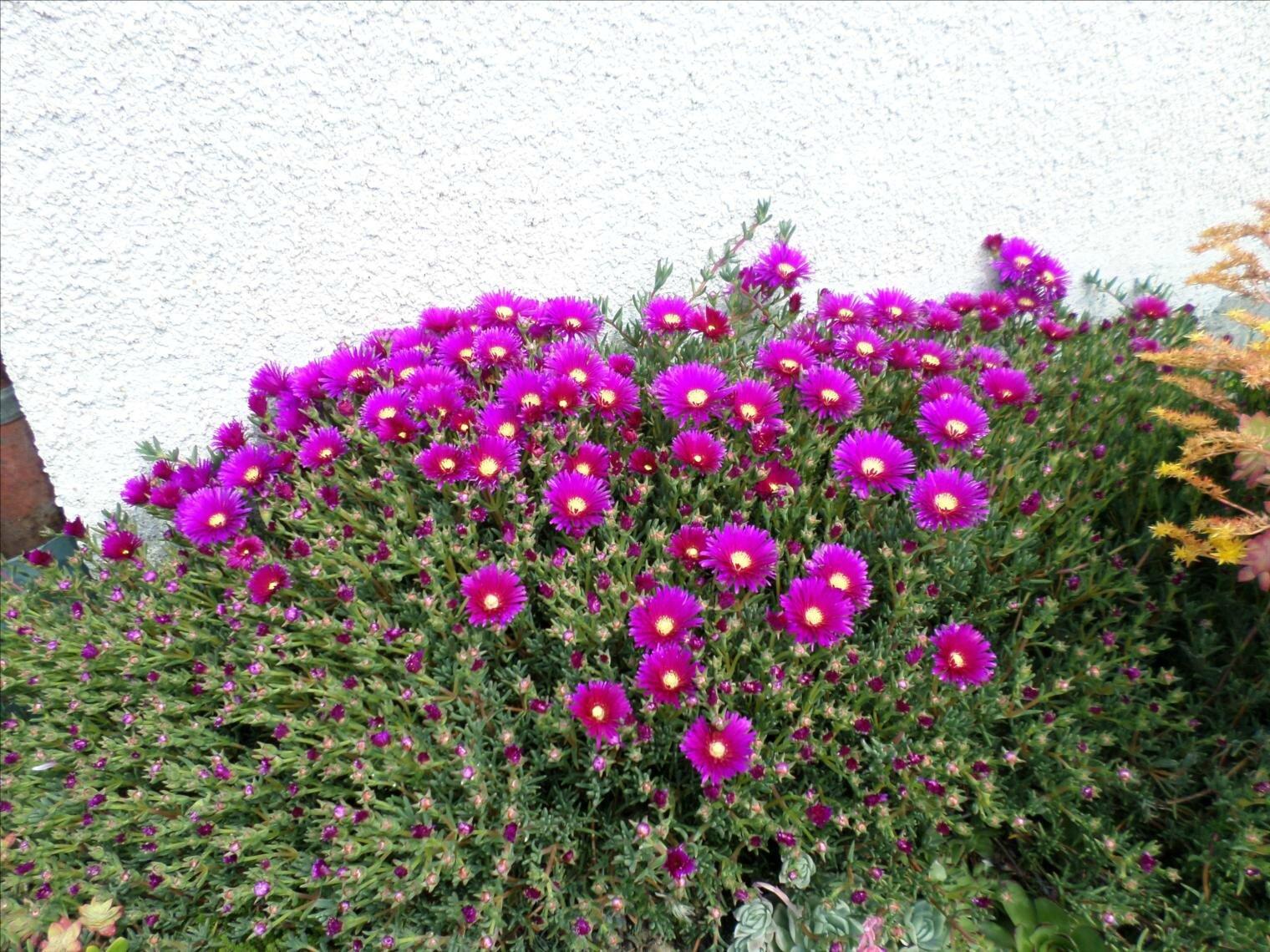 et si c 39 tait le bonheur les fleurs du jardin les petits bonheurs de lysevaine. Black Bedroom Furniture Sets. Home Design Ideas