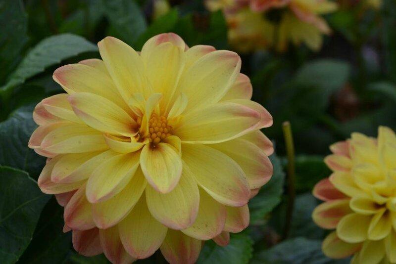 fleurs lecluse (1)