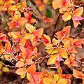 Des couleurs d'automne au printemps!