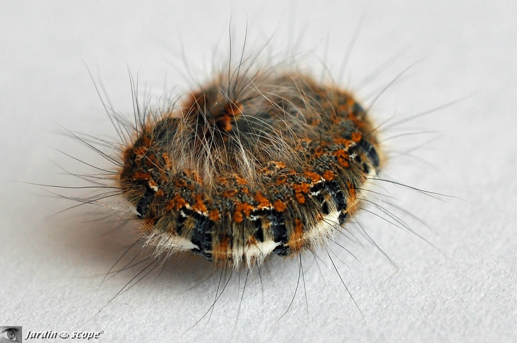 animaux fil chenille