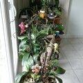 Mercredi était consacré aux orchidées...
