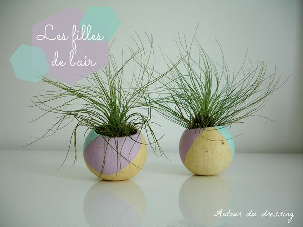 DIY Tillandsia filles de l'air coque 2