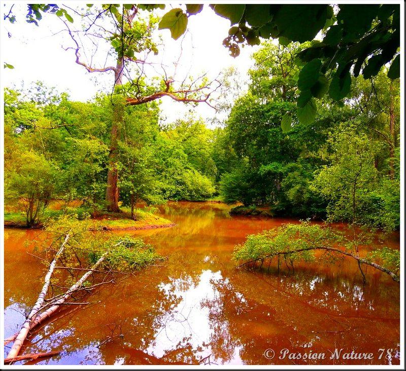 Un air d'Amazonie (21)