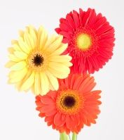 fleurs_vis