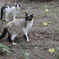 2008 06 24 La mère chatte et son petit dans le jardin
