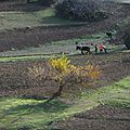 agiculture traditionnelle
