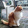 Chats et chatons à l'adoption en 2018 :
