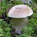 2009 09 26 Mon premier cèpe trouvé de l'automne (2)