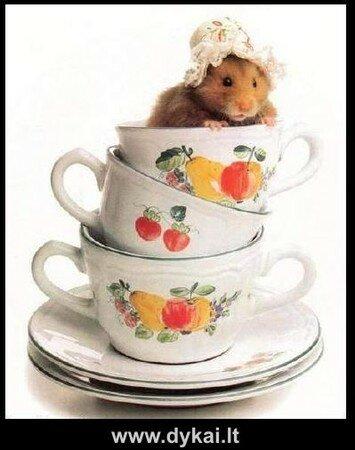 hamstercup